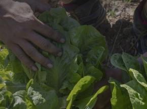 Agroécologie-alimentaton @MMM