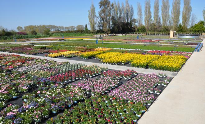 Soutien aux producteurs horticulteurs @Marie Levaux, directrice de Cannebeth