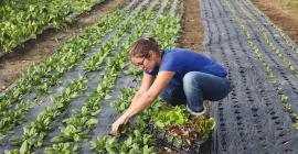 """Du 30 août au 7 octobre, c'est la 4e édition du """"Mois de la Transition Agroécologique et de l'Alimentation Durable"""". @andre hampartzoumian"""