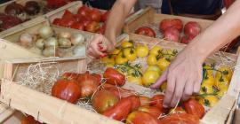 Festival de la tomate, Clapiers, lors du Mois de l'agroécologie et de l'alimentation durable