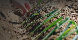 Une politique agroécologique et alimentaire ambitieuse et durable